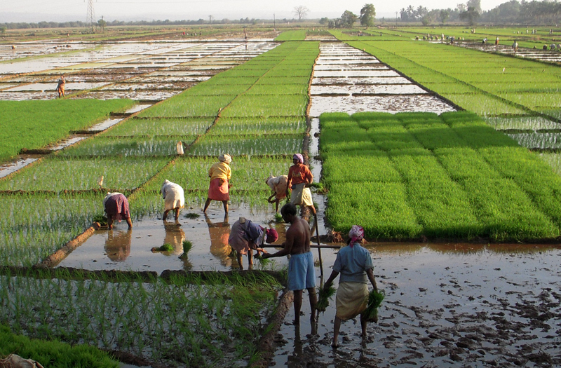 India-2011-064a