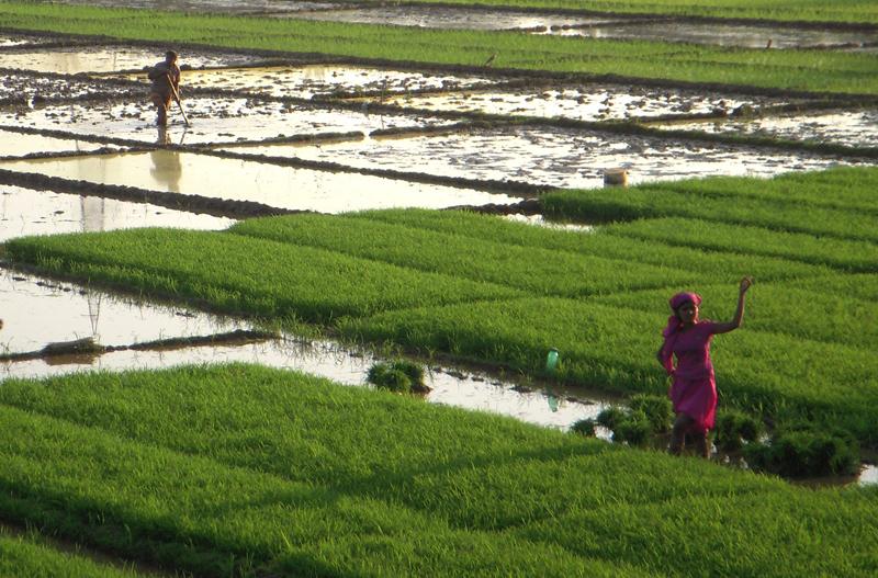 India-2011-068a
