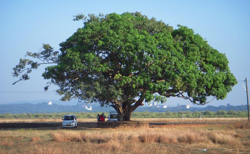India-2011-089a